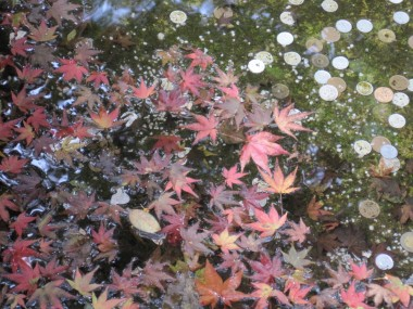 Ginkakuji - Close up of one of the ponds where people throw in coins and the trees drop leaves.