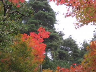 In the gardens of Ginkakuji - The Silver Temple - View up into the colorful trees.