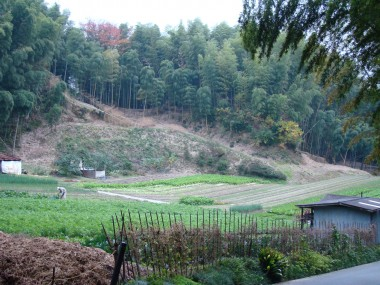 Fushimi Inari Taisha - We passed by a vegetable farm on our adventure.
