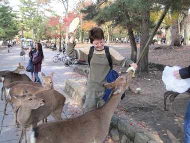 Nara - Rachel feeding cabbage to the deer in Nara.