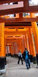 People from last year's tour walking under the many torii (gates) at Fushimi Inari Taisha Shinto Shrine.