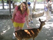Mary petting a tame deer on Miyajima Island in Hiroshima Bay.