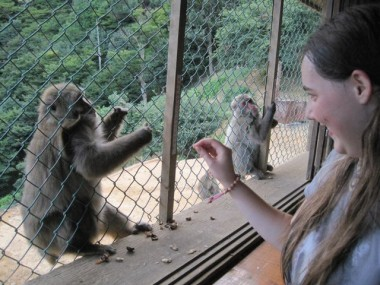 Lauren feeds a monkey on a mountain in Arashiyama, in the northwest of Kyoto, Japan. And don't feel bad: the monkeys were free; it was us humans who had to get into a cage to feed them!