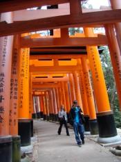 Teens from last year's tour walking under some of the many torii (gates) at the Fushimi Inari Taisha Shinto shrine.